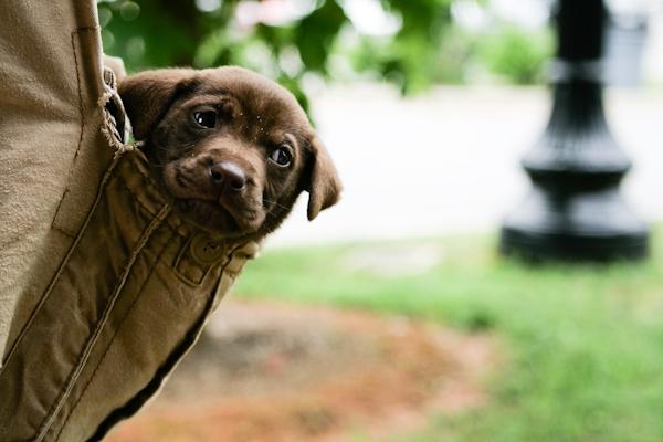 Seu cachorro te enxerga como mãe ou pai?