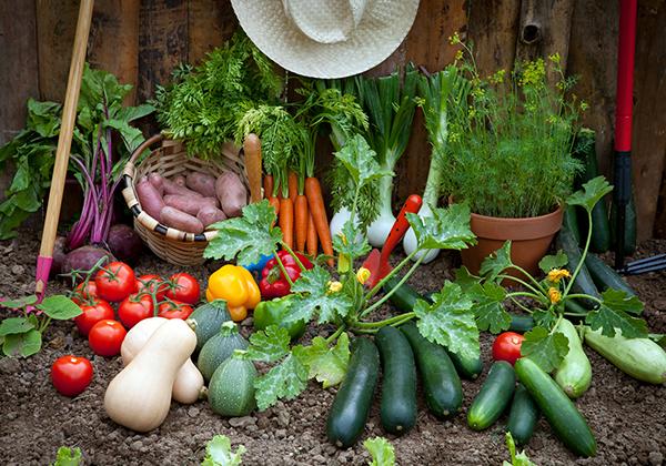 Alimentação saudável: como começar e o desafio de mantê-la